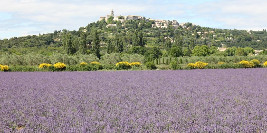 Provenceetlavande