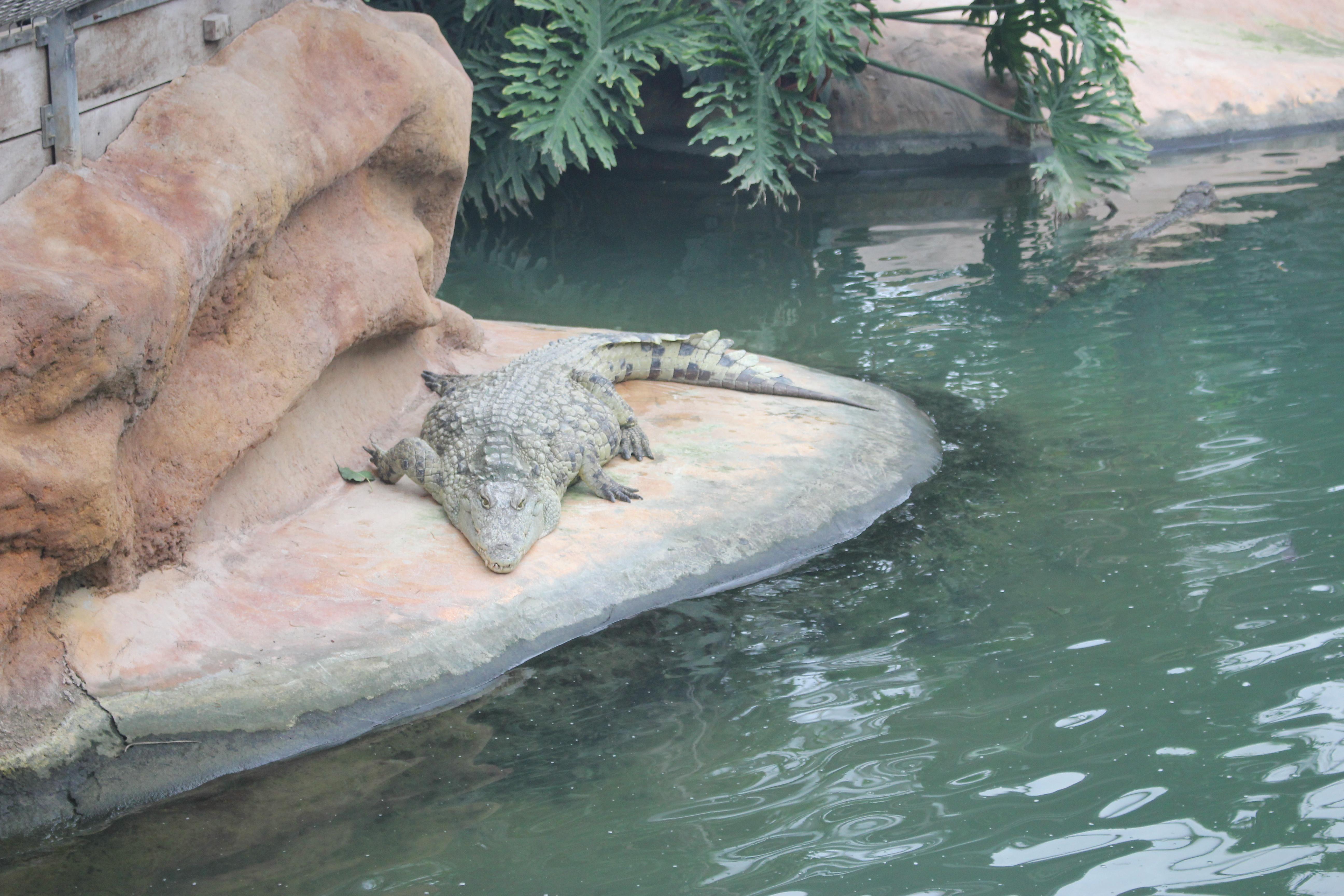 Ferme aux crocodiles Pierrelatte