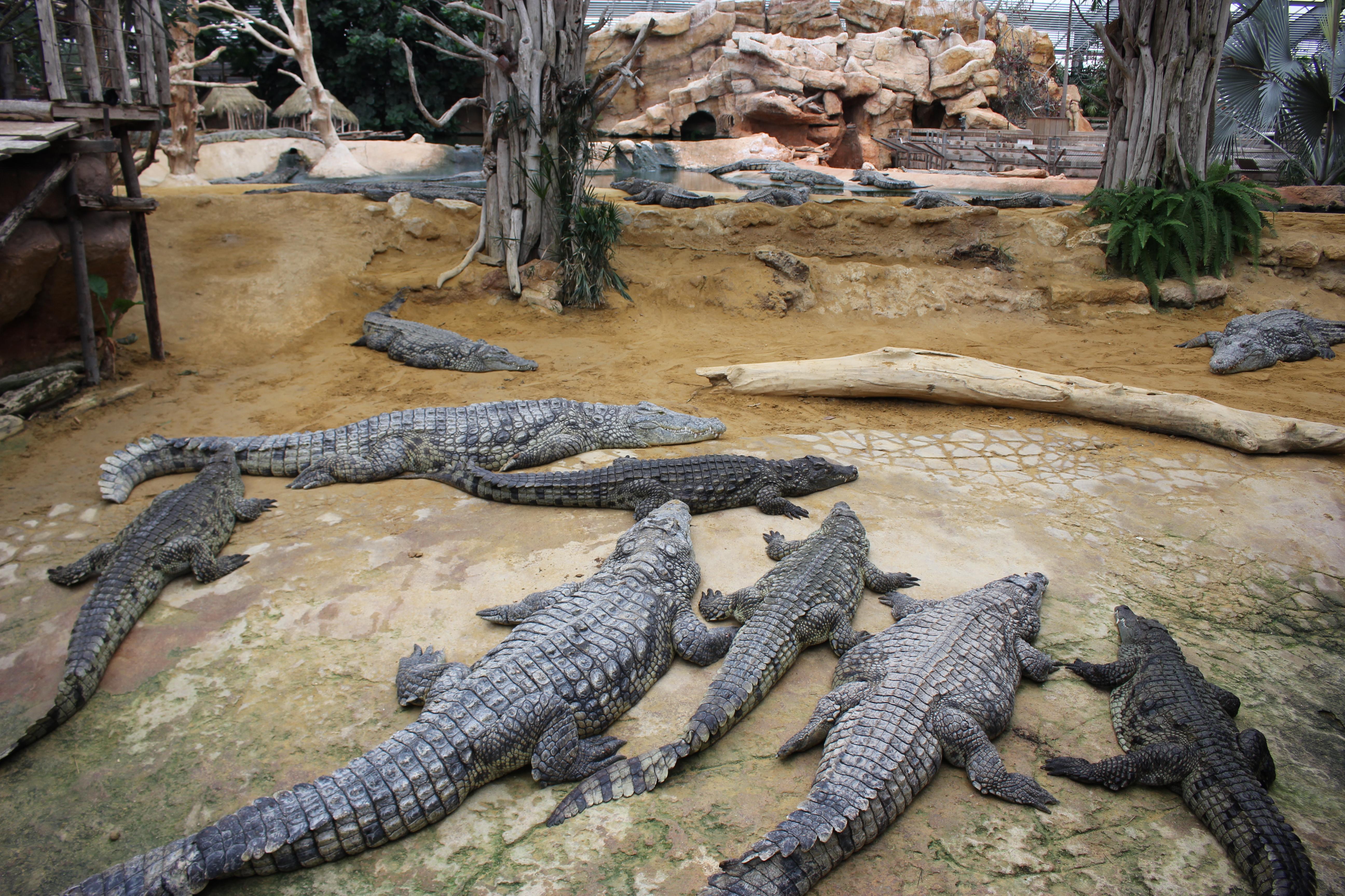 Ferme aux crocodile Pierrelatte