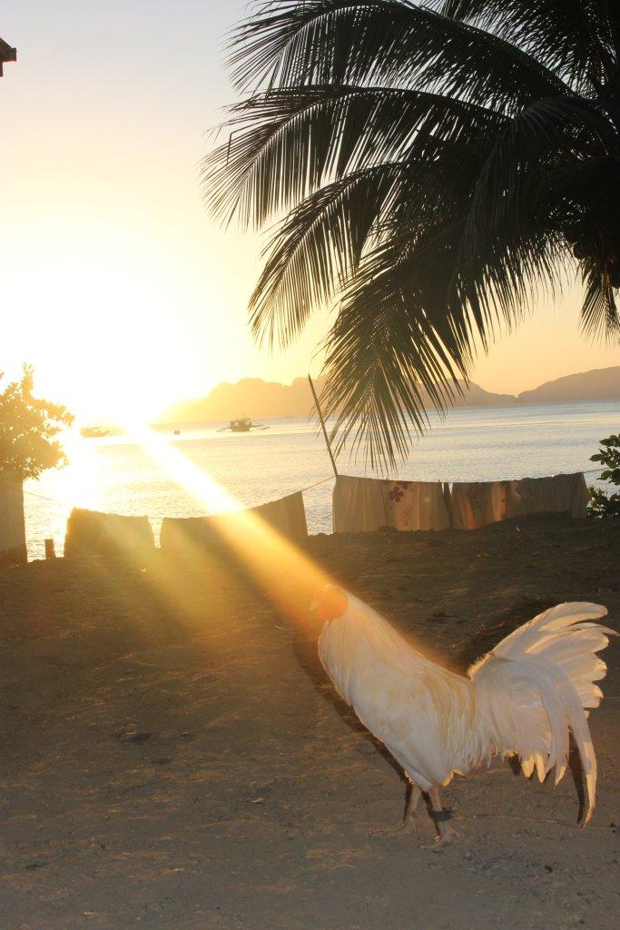 sunset el nido palawan